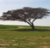 jtel: дерево