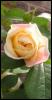rayne_jd userpic