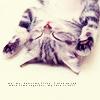 kitty upside down