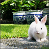 Random - Bunny Wabbit!