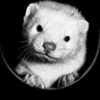 whiteweasel userpic