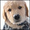 benny - snow