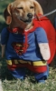 собака супермена