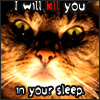 cat kill you