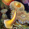 Haeckel anemones - by neitherday