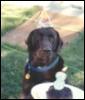 beardog321 userpic