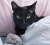 kittysparkles: sleepy juneau