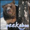 Heliona: bear - peekaboo