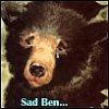 Ben / KC_Risen Phoenix!: Bears:  Sad Bear