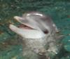 delphidelphin