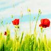 redpistolet userpic