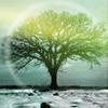cyperus_papyrus: tree with aura