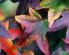 serenitycm userpic
