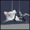 mouse40 userpic
