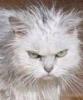 Недобрый кот