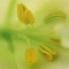 flowerpr0n