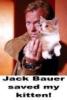 jackbauer-kitten
