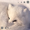 arctic_foxx userpic