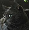 oscar_the_cat userpic