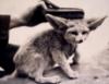 luminous_fox userpic