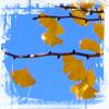 praeteritio userpic