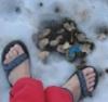 shoreshy na snegu