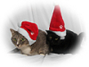 holiday, Xmas Kitties