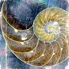 bluedoran userpic