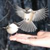 птички(=