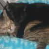 animal - my kitties