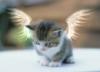 котёнок-ангел