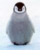 penguin_dances userpic