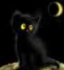 черный котик :)