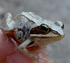 вот такая я жаба!!
