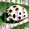 zxencx userpic
