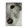 Golden Retriever, Ashby, National Canine Cancer Foundation