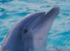 flipper_dyke userpic