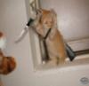 catgirlthecrazy userpic