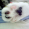 bella hind paw