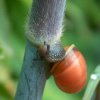 workup, snail