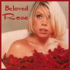 beloved rose