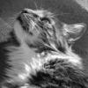 guidecat userpic