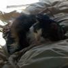 catkeeperkn userpic