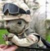 squirrel_trish userpic