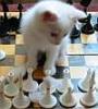 Ход котом