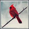 Miyeko: Cardinal