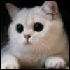 kotik_nadin userpic