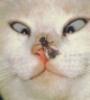 Laxesis: Кот под мухой