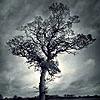 thetreeisme userpic
