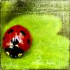 sandtigeress userpic